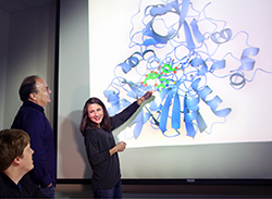Sandia National Laboratories researchers Matthew Mills, left, and Ken Sale, center, look on as researcher Amanda Kohler points toward a model of LigM, an enzyme whose structure they have solved. (Image by Dino Vournas).