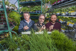Ronen Polsky, Ron Manginell, and Philip Miller hold tiny sensors surrounded by a warehouse of plants.