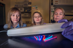 Lauren Rohwer, Dorina Sava Gallis, and Kim Butler examine tubes of glowing MOF nanoparticles that they designed, synthesized, and tested.