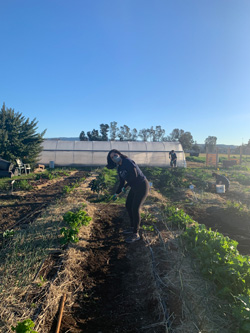 Making way or fresh produce