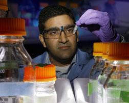 Sandia's Rajat Sapra examines assays for the screening of engineered enzymes, originally from the organism Sulfolobus solfataricus, which show increased activity and stability at acidic conditions and high temperatures.